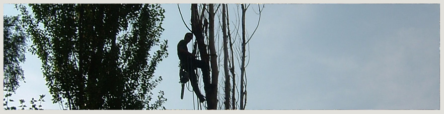 image of an Enviro Tree Care crew in a tree